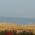 002 Vogelnaturschutzgebiet