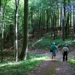 drogi lesne